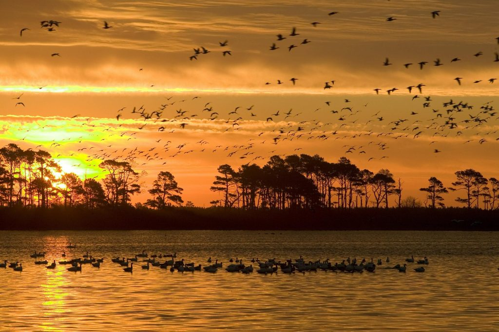 etats-unis-itineraire-Chincoteague-Assateague Island